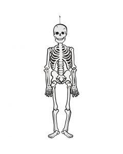 Skelett, H: 120 cm, 300 g, vit, 1 st.