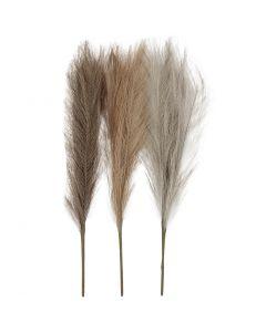 Pampasgräs, L: 50 cm, ivory, ljusbrun, ljusgrå, 3 st./ 1 bunt