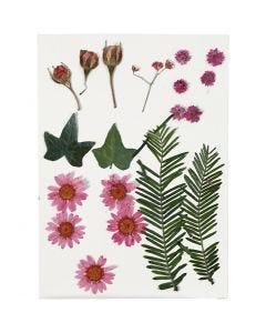 Torkade blommor och blad, ljusröd, 19 mix./ 1 förp.