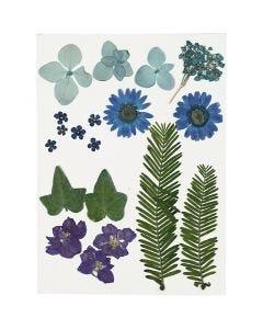 Torkade blommor och blad, blå, 19 mix./ 1 förp.