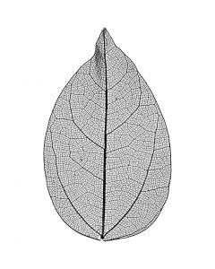 Skelettblad, L: 6-8 cm, svart, 20 st./ 1 förp.