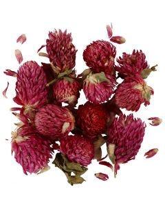 Torkade blommor, Rödklöver, L: 1,5-2,5 cm, Dia. 1 - 1,5 cm, lila, 1 förp.