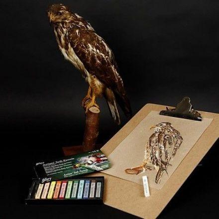 Rovfågel med torrpastell