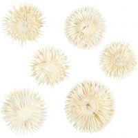 Torkade blommor, Dia. 3-5 cm, 6 st./ 1 förp.