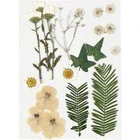 Torkade blommor och blad, råvit, 19 mix./ 1 förp.