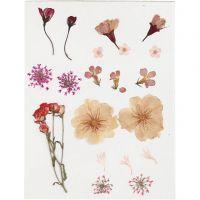 Pressade blommor, ljusrosa, 1 förp.