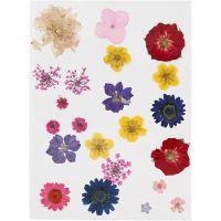Pressade blommor, mixade färger, 1 förp.