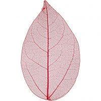Skelettblad, L: 6-8 cm, röd, 20 st./ 1 förp.