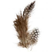 Pärlhönsfjädrar, brun, 3 g/ 1 förp.